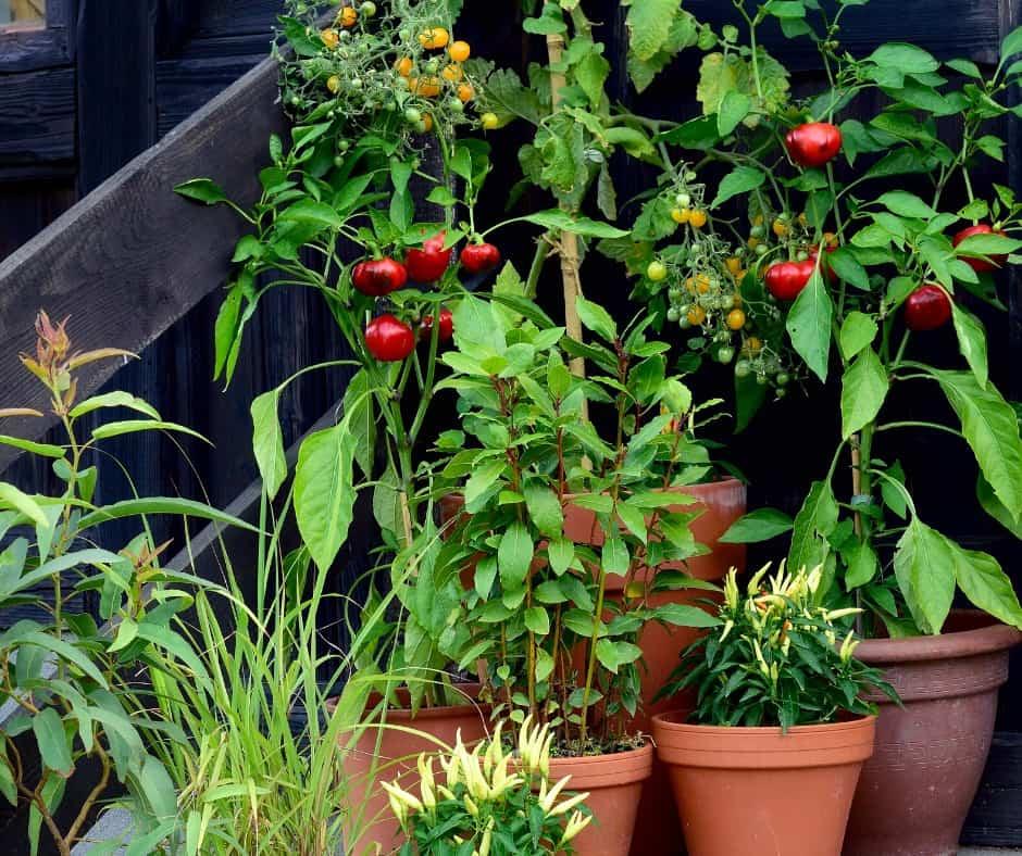 edmonton-balcony-gardens